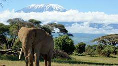 mountain kilimanjaro wallpaper: High Definition Backgrounds, 1920x1080 (315 kB)