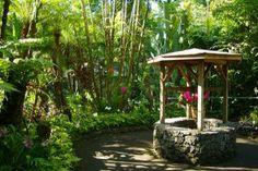 Cum puteti avea plante tropicale in gradina? | HomeGeek - Casa & Gradina