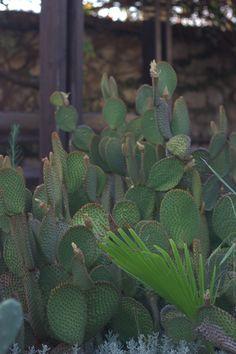 Cactus in Holon cactus park Cactus Park, Israel, Plants, Plant, Planets