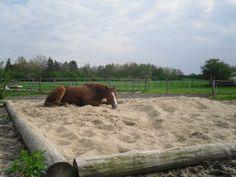 Billedresultat for paddock paradise Paddock Trail, Horse Paddock, Horse Arena, Dream Stables, Dream Barn, Horse Shelter, Horse Property, Horse Ranch, Horse Tips