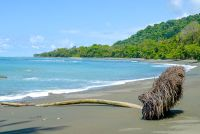 heavenly beach hiking from sirena to la leona ranger station Corcovado National Park Parque Nacional Corcovado, Corcovado National Park, National Park Tours, Big Bird, Costa Rica, Heavenly, Ranger, Wildlife, Hiking