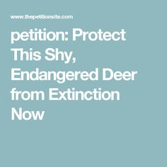 petition: Protect This Shy, Endangered Deer from Extinction Now