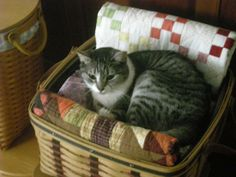 cat on quilt | CoOL Photos - my cat resting on a quilt basket