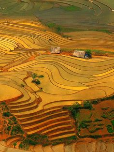 Have you ever witnessed such a stunning landscape like this before? Vietnam #travel - Y Ty Terrace Field. Let's see how beautiful Vietnam is http://www.exoticvoyages.com/vietnam-travel