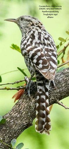Pretty Birds, Beautiful Butterflies, Beautiful Birds, Animals Beautiful, Small Birds, Little Birds, Colorful Birds, Nature Animals, Animals And Pets