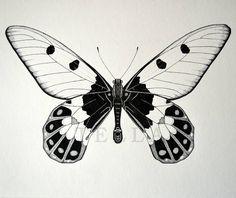 Výsledek obrázku pro motýl kresba