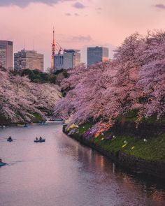 #Chidorigafuchi #Japan #Tokyo #Trip #Travel #Sightseeing Spots, Superb Views #SuperbView #Destination #Sakura #CherryBlossoms #Spring #Flower Japan Travel, Us Travel, Tokyo Trip, Free Things To Do, Nihon, Activities To Do, Travel Advice, Best Hotels, Cherry Blossom