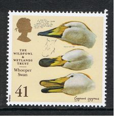 Whooper Swan Bird Illustration by Charles Tunnicliffe on 1996 British Stamp