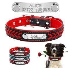 98caa88b5351 12 Best Dog collar/leash/harness images in 2018