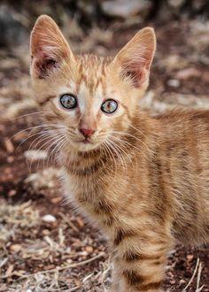 https://flic.kr/p/x3WwQi | Istria, Croatia 2015 | Kitten, Cat at Moncerlongo Ranch, Rovinj