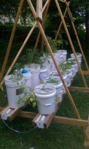 Self-watering Rain Gutter System & Tomato Cages