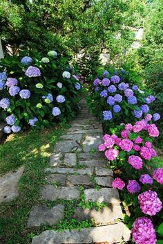 Hydrangea...they are so beautiful when in full bloom. My parents had some at the house growing up. Very interesting how their colors change based on the acidity of the soil. One year my father even tried to put something in the soil so some of ours would change from blue to purple!