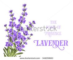 The lavender elegant card with frame of flowers and text. Lavender garland for your text presentation. Label of soap package. Label with lavender flowers. Lavender Cottage, Circle Labels, Soap Packaging, Korn, Lavender Flowers, Design Elements, Garland, Presentation, Elegant