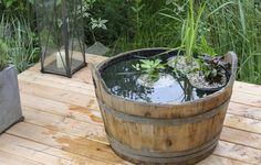 Mini-Teich für die Terrasse (Foto: Folkert Siemens)