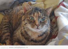 http://www.adoptiipisici.ro/trisha-o-pisicuta-deosebita-3/