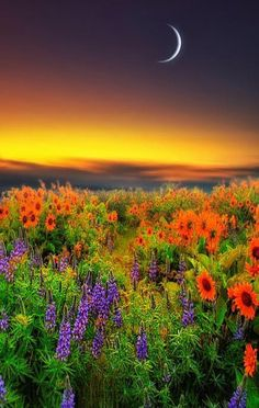 spring sunset with a crescent moon over a field of flowers in Alentejo, Portugal Beautiful Moon, Beautiful World, Beautiful Places, Images Cools, Image Nature, Jolie Photo, Nature Pictures, Amazing Nature, Pretty Pictures