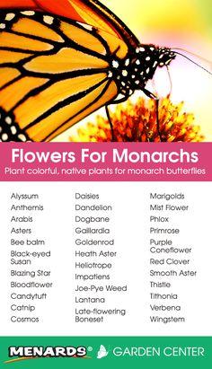 Plant colorful, native plants for monarch butterflies! Read full article: http://www.menards.com/main/c-14244.htm?utm_source=pinterest&utm_medium=social&utm_content=monarchs&utm_campaign=gardencenter