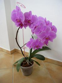 Náhodně vybraná fotografie Garden, Plants, Garten, Lawn And Garden, Flora, Gardening, Outdoor, Plant, Gardens