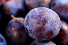Angelino szilva – egy japánszilva fajta, mely szeptember végétől október elejétől érleli zamatos, aromás gyümölcseit. Hasznos tudnivalók, információk. Plum, Blueberry, Fruit, Food, Berry, Essen, Meals, Yemek, Blueberries