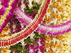Fresh Hawaiian Flower Leis