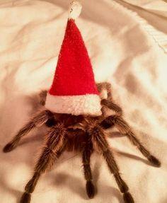 Christmas Tarantula