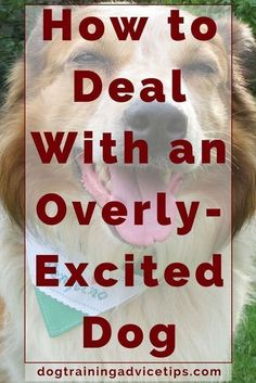 How to Deal With an Overly-Excited Dog   Dog Training Tips   Dog Obedience Training   Dog Training Ideas   http://www.dogtrainingadvicetips.com/how-to-deal-with-an-overly-excited-dog #MasterDogTrainingandSocializing #DogObidience