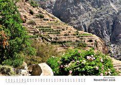 Rose gardens near Al Ayn, green mountains of Oman