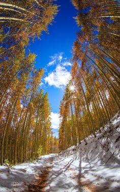 Aspen Grove by Toby Harriman on 500px