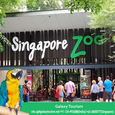 Singapore Zoo is one of the best place for visit in Singapore. Explore this famous destination with Galaxy Tourism.  Read More:- http://goo.gl/Pdtc8P