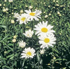 plantes vivaces massif de vivaces fleuri toute l 39 ann e. Black Bedroom Furniture Sets. Home Design Ideas