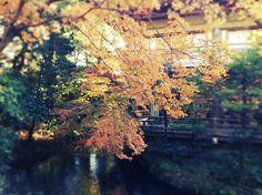 まだ秋な場所