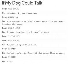 """If my dog could talk....must add - """"What's that? Can I eat it? I'm gonna eat it!"""""""