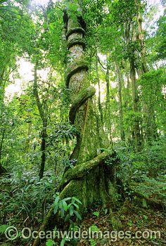 Tropical Rainforest Sumatra (Indonesia) | I ♥ fascinating Places ...