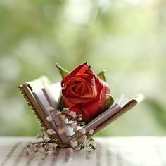 book décor and a rose George Sand, Hd Rose, Single Rose, Rose Wallpaper, Wallpaper Desktop, Rose Cottage, Love Symbols, Shades Of Red, Beauty And The Beast