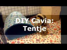 DIY Cavia: Tentje van fleece - YouTube