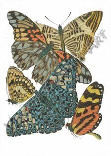 Motyle przez Seguy clip art Vintage Digital Download | Etsy Art Nouveau, Art Deco, Image Shows, Natural World, Printable Wall Art, Background Images, Wall Art Prints, Monitor, Clip Art