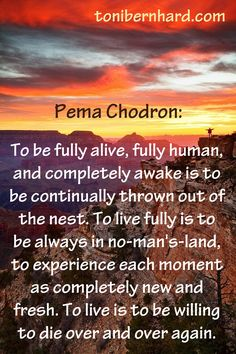 Throw yourself out of the nest; the comfort zone is a rusty cage. Spiritual Wisdom, Spiritual Awakening, Mindfulness Meditation, Chakra Meditation, Frases Yoga, Wounded Healer, Buddhist Quotes, Pema Chodron, Healing Words