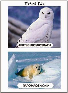 Ιδέες για το νηπιαγωγείο(εποπτικό υλικό,δραστηριότητες,κατασκευές). Polar Animals, Polar Bear, Polo Norte, Continents, Arctic, School, Winter, Geography, Winter Time