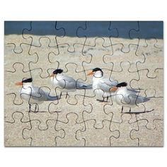 FOUR ROYAL TERNS Puzzle