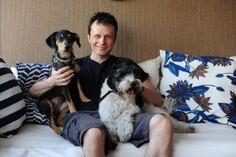 Casa do Dr. Pet é superadaptada para os cães; conheça - Casa e Decoração - UOL Mulher Boston Terrier, Dog Cat, Dog Things, Animals, Designers, Baby, New Look Bags, Pretty Animals, Cute Pets
