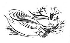 Spencerian Saturday - Pen Flourished Bird on Branch - The Graphics Fairy