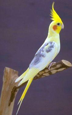 Resultados de la Búsqueda de imágenes de Google de http://www.forodefotos.com/attachments/fotos-de-aves/14150d1287027835-aves-exoticas-aves-exoticas-cotorra.jpg