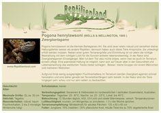 Zwergbartagame (Pogona henrylawsoni) - kompakte Übersicht der Haltungsbedingungen. Unsere Karteikarten können auch zum Beschriften von Terrarien verwendet werden. Ausführliche Haltungsinformationen gibt es auf www.reptilienland.com