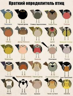 Common British Birds by Cher is a depiction of common birds found in britain which have been created with the use of simplified shapes and muted colour. Common British Birds, Common Birds, British Wildlife, Wildlife Art, Animals Watercolor, Bird Poster, Bird Quilt, Bird Illustration, Digital Illustration