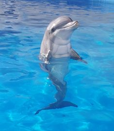 #grandcayman #dolphinshow #barrierreef #swimwithdolphins #ilovedolphins #coralreef #marinelife…""