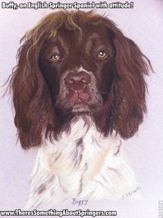 Buffy, an English Springer Spaniel with attitude! A portrait for her 5th birthday. Her eyes follow you round the room like the Mona Lisa! Portrait by Suzanne Blanks.