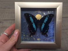 Natural World, Natural History, Space Theme Classroom, Education Galaxy, Butterfly Frame, Taxidermy, Curiosity, Abstract Backgrounds, Insects