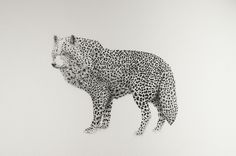 Bestiary of Improbable Animals 2 (drawings) on Behance