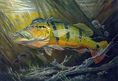 The Great Peacock Bass Art Print by Terry  Fox