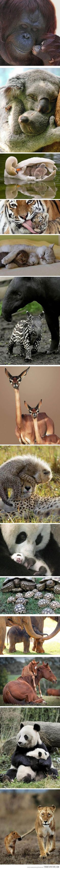 Family portraits in the animal kingdom…